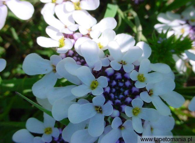 Dsc05127, tapety Kwiaty, Kwiaty tapety na pulpit, Kwiaty