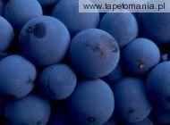 fruits 15