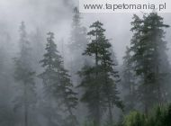 Mist of the Clearing Storm, Mount Hood National Forest, Oreg