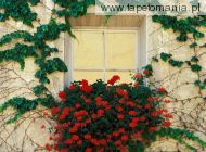 Vines and Flowers